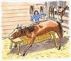 horse chro