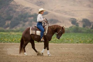 Sandy learned from Tom Dorrance and Ray Hunt how to make training easier on performance horses.