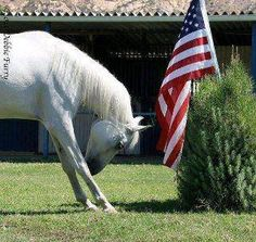 Horse and veterans day