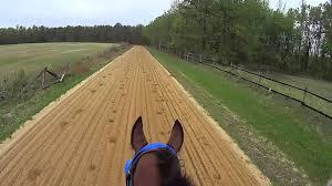 horse pro
